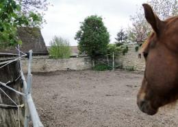 Auslauf Pferd