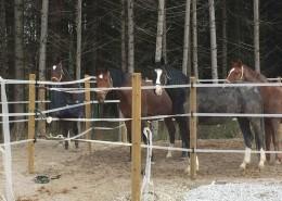 Die Pferde warten auf den Paddock