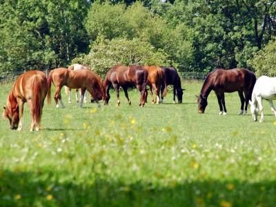 Offenstall Pferdegruppe