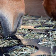 Heukiste für Pferde