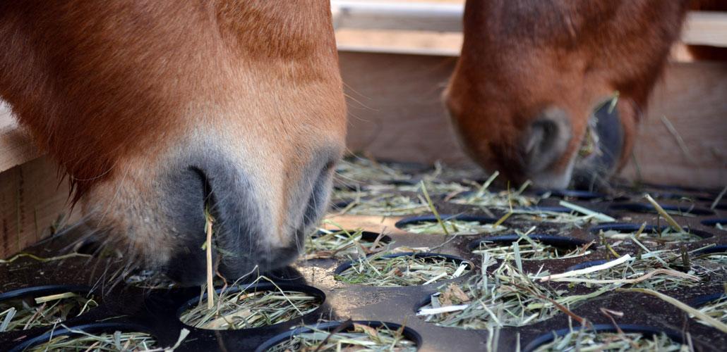 Heukiste aus Eiche für Pferde