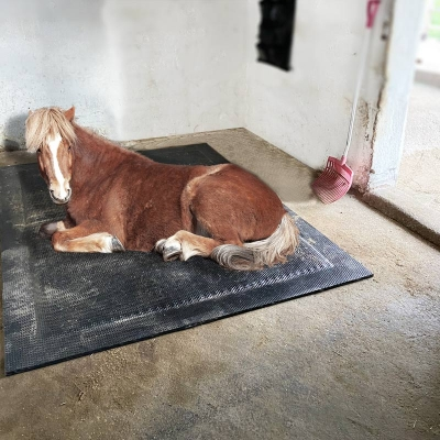 Softbett für Pferde - Typ Bubblebed