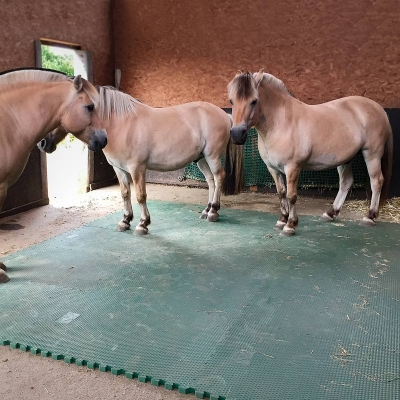 EVA Matten für die Pferdebox