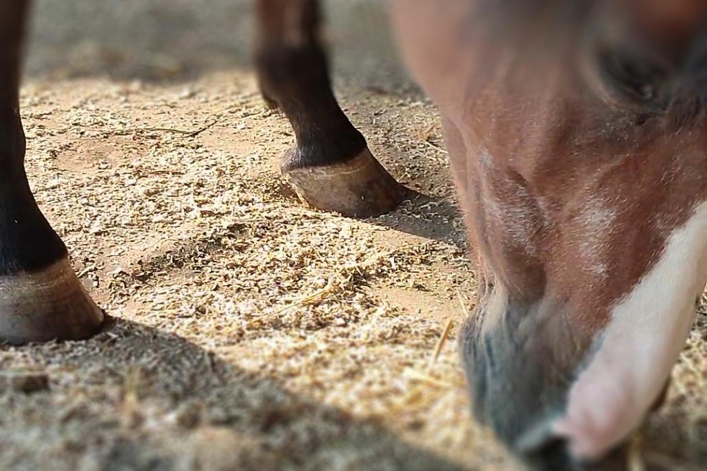 Variobed - Weicher Komplettboden für die Pferdebox und den Offenstall